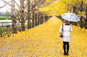 Portrait rear view of Happy young attractive Asian woman holding umbrella standing under beautiful ginkgo biloba tree with falling yellow ginkgo leaves in autumn. Beauty nature in autumn concept.