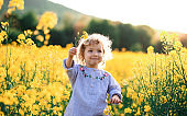 Front view of happy small toddler girl running in nature in rapeseed field.