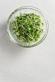 Fresh micro greens arugula sprouts in a glass bowl on a light gray concrete background.