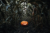 Halloween holiday background. Spooky glowing jack-o-lantern pumpkin on the ground in a cornfield.
