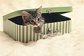 Cute tabby kitten peeking out of a gift box in the form of a small suitcase
