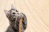 Cute gray kitten with expressive eyes paws on the handle of a wicker basket on a background of a cream fur plaid., copy space