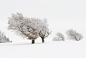 Beautiful winter picture