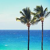 Blue beach ocean palm trees background