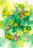 Watercolor Painting - Koi fishes gather together