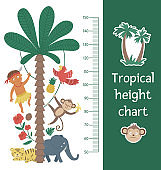 Vector cute height chart with exotic animals, African boy, leaves, flowers, fruits. Funny wall decoration with tropical aboriginal, monkey and plants. Jungle summer meter poster for kids