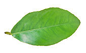 green lemon leaf with clipping path