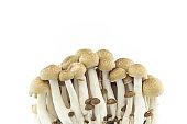 group mushroom on white background.