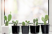 Collection of various cactus and succulent plants in different pots on window sill.