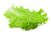one lettuce leaf isolated on a white background