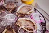 Oysters on an ice plate