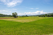 Expansive Colorful Fields in a Tropical Countryside - Philippines