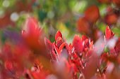 Beautiful Autumn leaves with red, yellow, green colors
