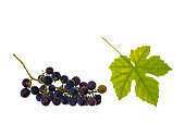ripe organic red table grapes with leaf isolated on white background