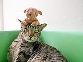 Siamese tabby cat and small dog doll