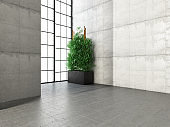 Concrete Wall with Window and Plant