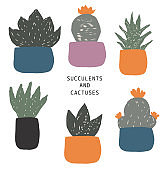 Vector seamless set of house plants in pots hand drawing in flat style . Colorful botanical illustration of succulents and cactuses.