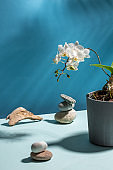 White orchid flower in concrete pot on blue background. Creative still life.