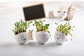 Daikon radish, rutabaga and  coriander sprouts in egg shells on white background. Easter decoration. Gardening concept. Concept of beginning of life.