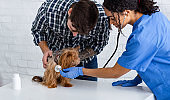Veterinary medicine. African American vet doctor doing checkup of cute doggy in animal clinic