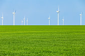 Bright green grass and blue sky. Nature conservation concept