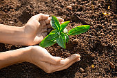Fresh young plant growth in soil in hand. Plant,tree as symbol of start new life, care about nurture and environmental conservation. Female hands holding green sprout with soil.