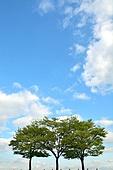 나무와 하늘