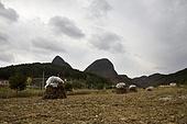 Landscape in Korea