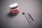 치아 치아모형 의료기기