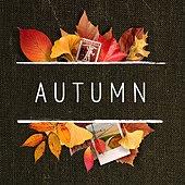 가을, 낙엽, 단풍