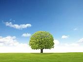 봄, 자연, 초원, 하늘, 나무