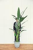 A man behind a plant