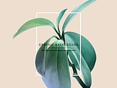 백그라운드, 잎, 로맨틱
