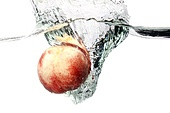 Peach Splashing in Water