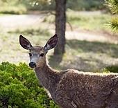 deers on meadow