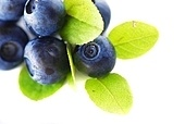 Blueberries over white background. Shallow depth of field.