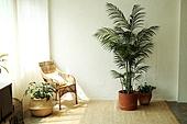 in a room,거실,방,집,인테리어,화분,식물,화초,의자,스툴