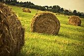 Haystack on a field