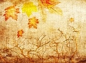 grunge abstract fall background with trees and colorful leaves