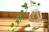 꽃병의 식물