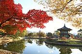 가을, 연못, 향원정, 경복궁, 한국문화재, 풍경, 단풍