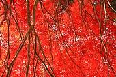 내장산국립공원, 가을 단풍, 단풍잎, 로우앵글