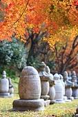 한국의 가을, 가을 여행, 단풍, 부도, 내장사