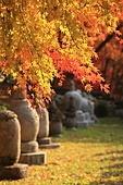 한국의 가을, 가을 여행, 단풍, 부도