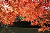 내장산, 가을, 단풍, 풍경