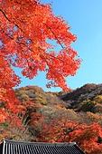 가을, 단풍나무, 단풍잎, 내장산, 단풍 명소, 풍경