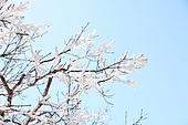 겨울, 눈, 나뭇가지 백그라운드