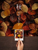 가을, 백그라운드, 풍경