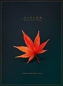 가을, 계절, 단풍잎