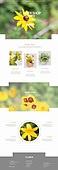 웹템플릿, 웹사이트, 꽃, 꽃가게 (가게)